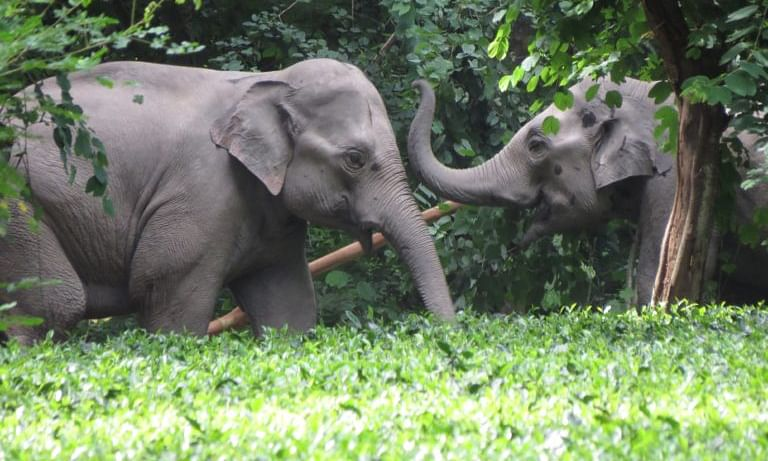 Assam govt temporarily halts transportation of 4 captive elephants