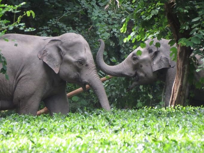 'Elephants transported from Assam to other states never come back'