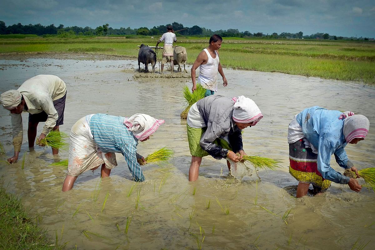 Agrarian produce in Assam and other NE states largely surpass consumption demand, but lack of export and storage facilities hinder farmers' profits.