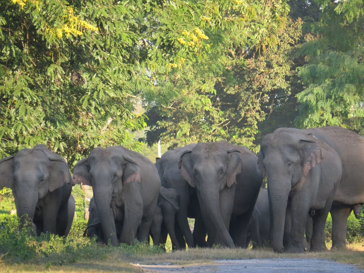 Assam government puts a temporary halt to transport four captive Jumbos to Ahmedabad