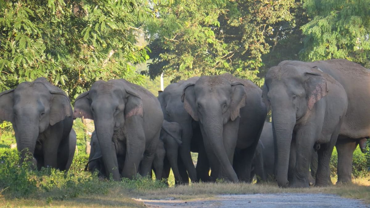 Fate of 4 Assam elephants to be sent to Gujarat remains unknown