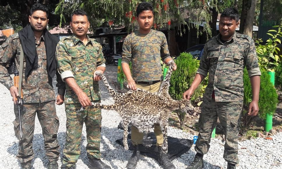 Leopard skin worth Rs 3.2 lakh recovered in Jalpaiguri, one held