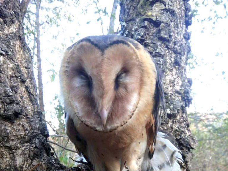 How students of Nagaland rescued an endangered owl species