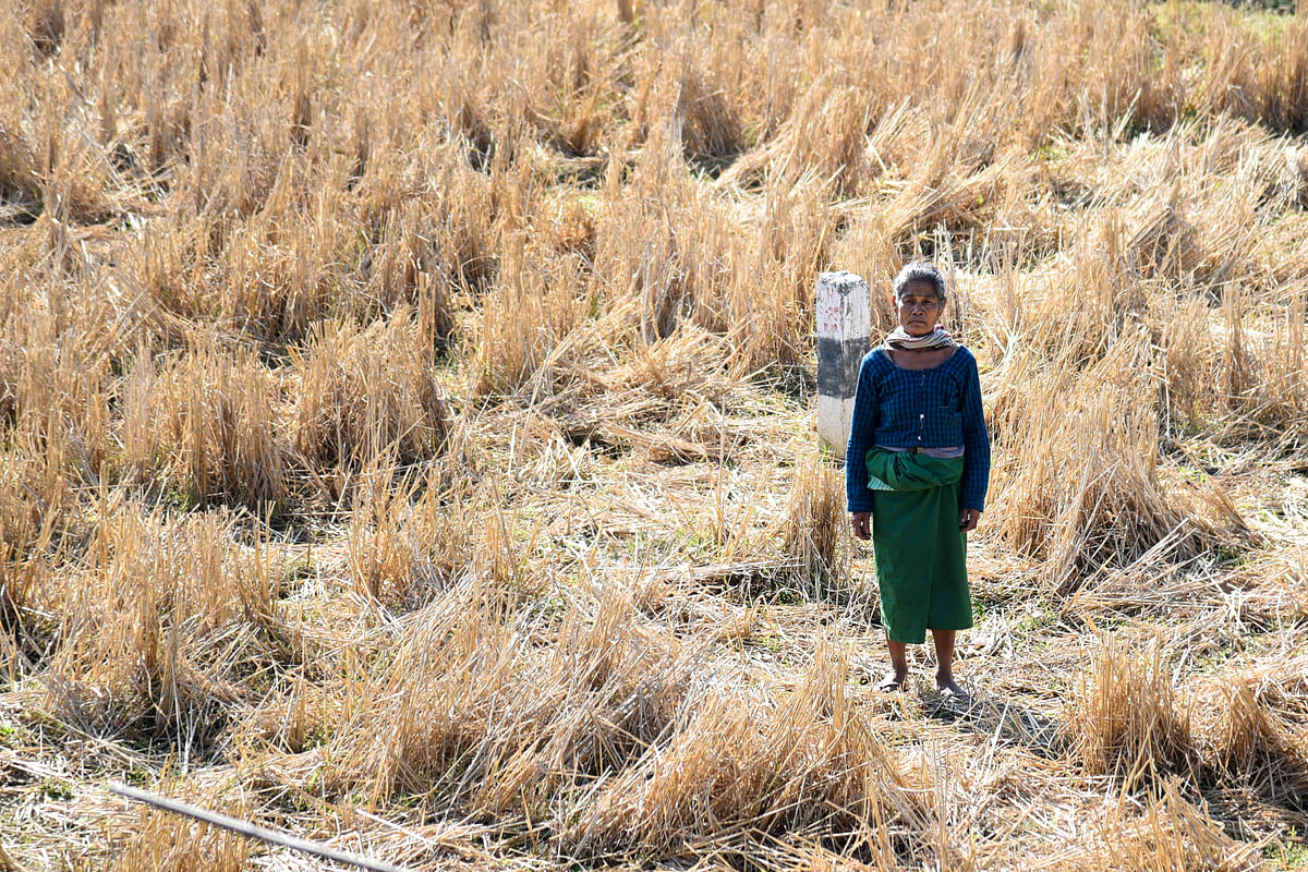 Bikasori Doley, residing at Bamungaon village, stands at her paddy field where elephants used to come every night for food as their footprints are clearly seen in the photograph. She lost seeds amounting to Rs 20,000 in an elephant attack in 2016. Forest officials assured her compensation but till date is uncertain whether or not she will be compensated