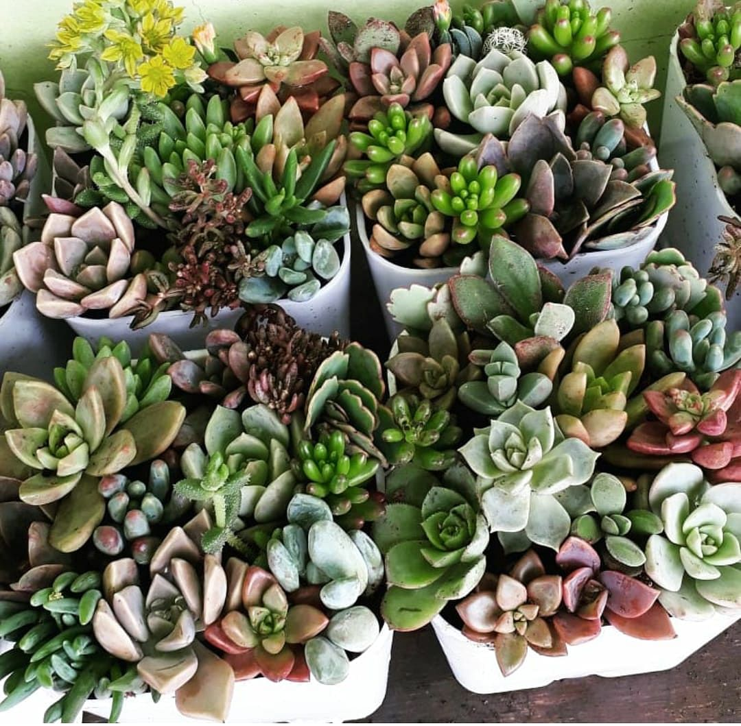 The best part about succulents and cacti is that even if you don't have much space, you can definitely fit these plants in your home