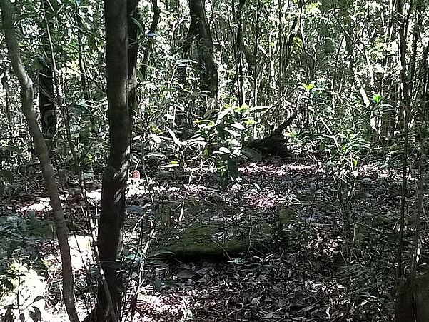 Meghalaya: Locals work to revive 27,000 hectares of sacred groves