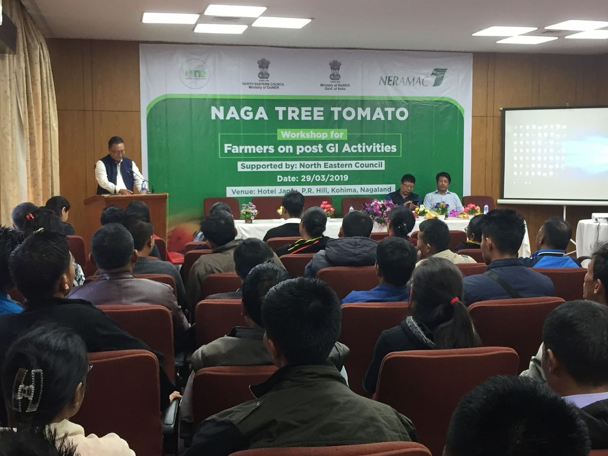 A workshop on 'Post GI Activities for Naga Tree Tomato and Registration for Authorised Users' was held in Kohima, Nagaland on Friday