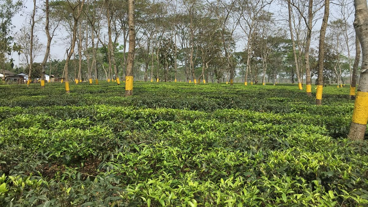 Assam tea estate assistant manager goes missing