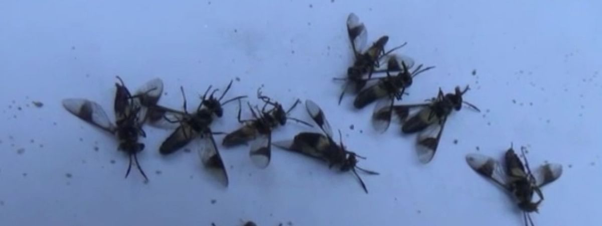 The bite of these insects causes itching and swelling in body