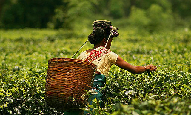 'Barbarism' in Assam tea gardens: ULFA(I) vows to punish guilty