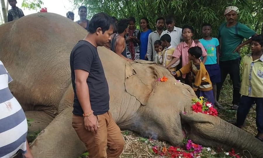 Electrocution emerges as the biggest killer of elephants in Assam