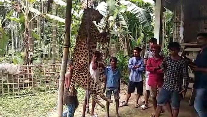 The leopard was hacked to death by locals