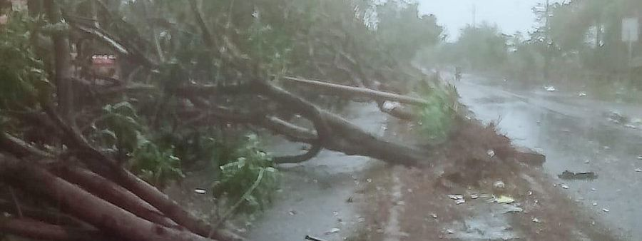 Tress up rooted in Odisha after Cyclone 'Fani' made its landfall on Friday.