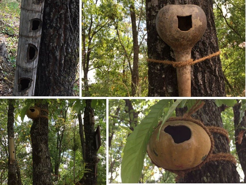 Creatively, Pavo made birdhouses out of bamboo, clay (round) pots and dried gourds, tied them to the trees. These serve as breeding spaces for small birds