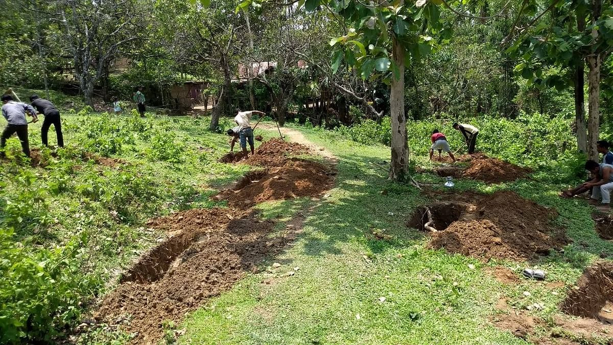 The saplings will be planted under the initiative of 'One Citizen, One Tree'