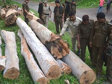3 Tripura forest officials suspended for illegal chopping of trees