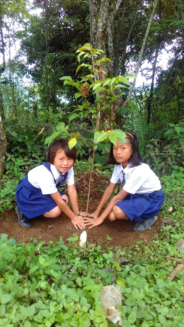 Students participating tree plantation drive at Dailong village in Tamenglong district on Wednesday