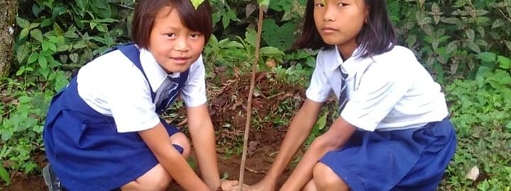 Students participating in a tree plantation drive at Dailong village in Tamenglong district on Wednesday
