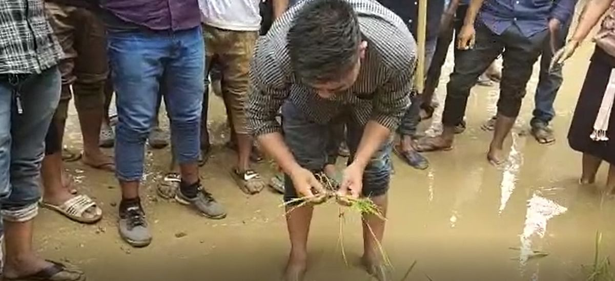 Members of the KSA stage a token protest by planting paddy on the National Highway-36 in Assam's Karbi Anglong district on Wednesday