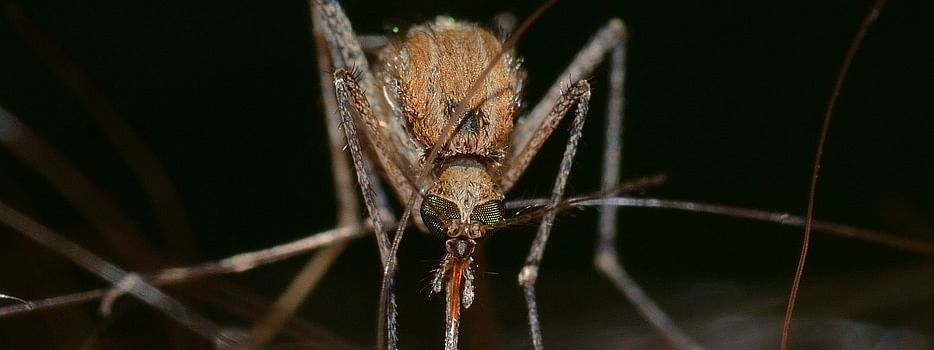 JE is transmitted by the Culex mosquito, a commonly found species in Mizoram