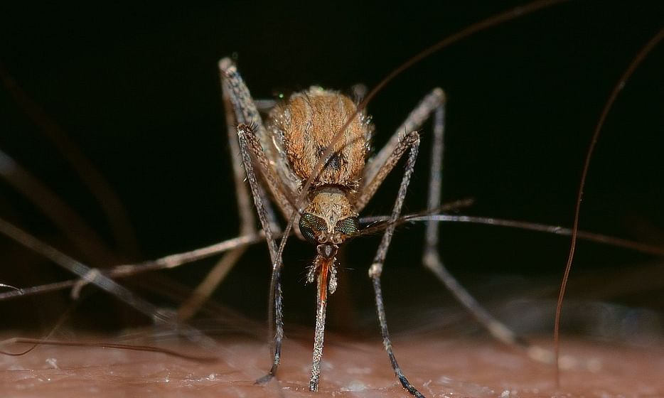 Japanese Encephalitis: Mizoram initiates precautionary measures
