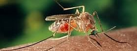Japanese encephalitis is transmitted by mosquitoes, particularly Culex species
