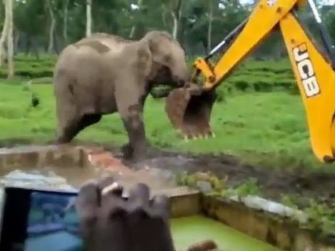 Jumbo vs JCB: When mother elephant takes on machine for its baby