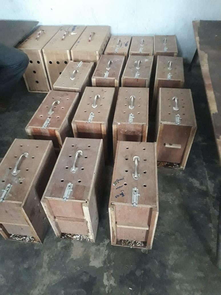 26 suspicious boxes carrying 26 exotic birds worth Rs 28 lakh were seized in Mizoram on Monday