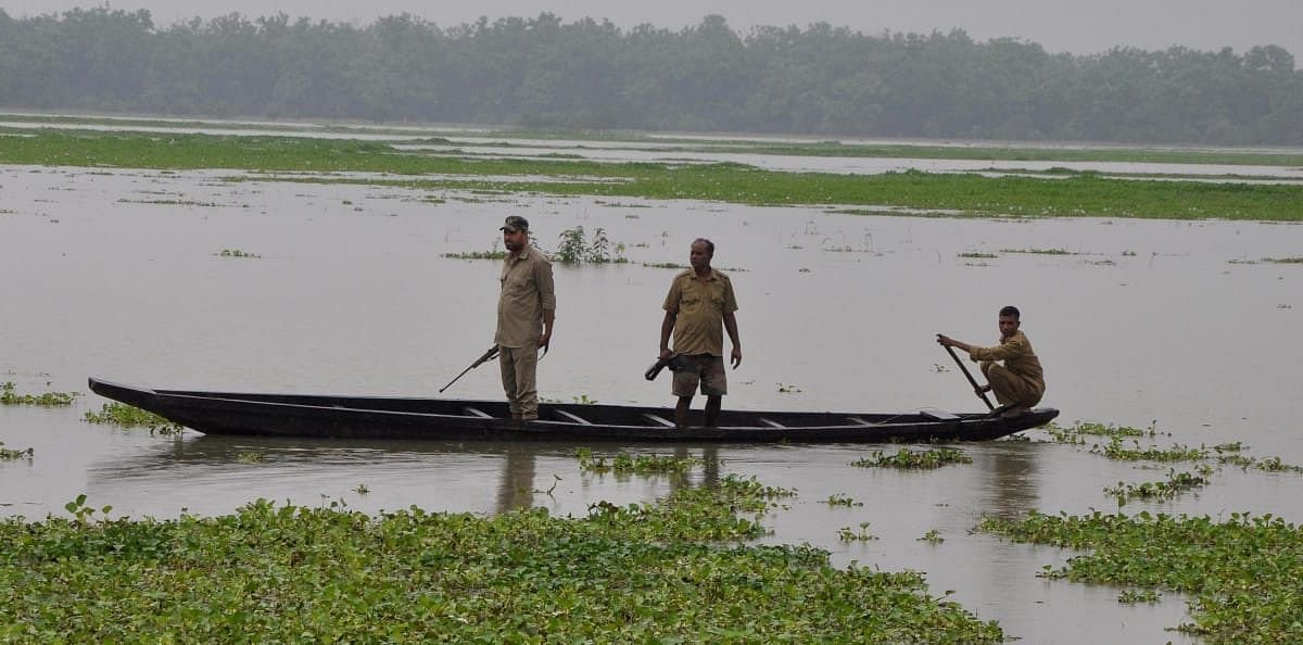Forest  guards are using boats to provide security to flood-hit animals