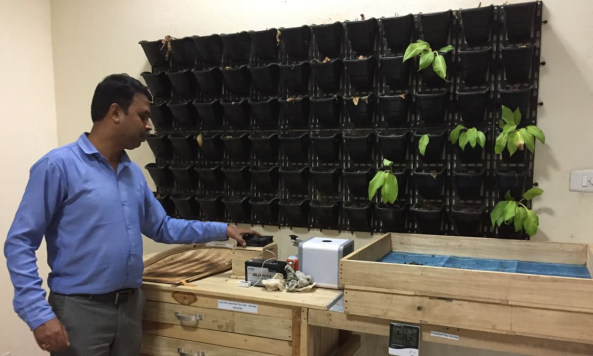 Tripura man who's making tea processing easier for small growers