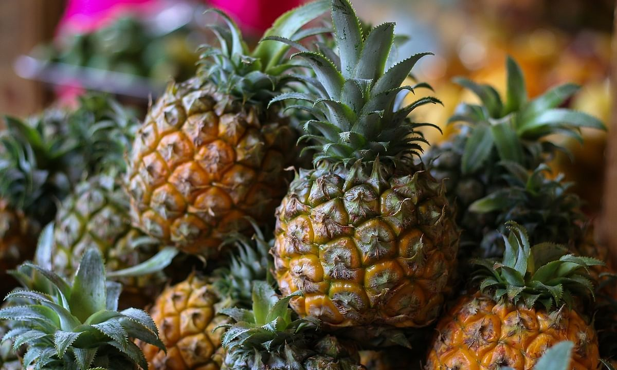300 metric tons of queen pineapples exported this year: Tripura CM