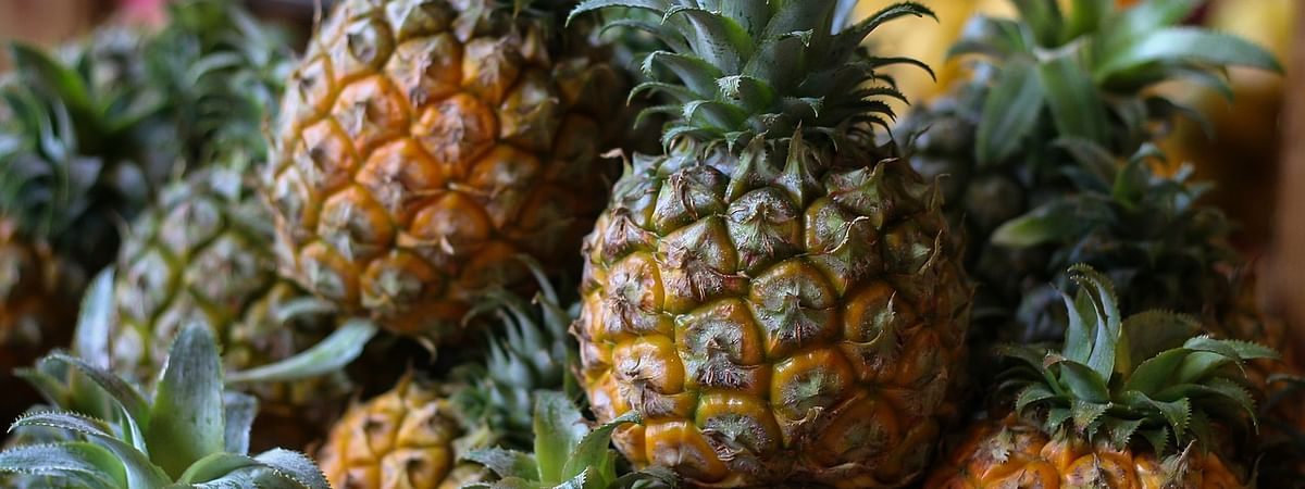Pineapples are cultivated in 8,800 hectares of land in Tripura
