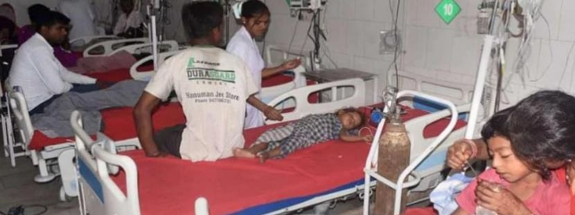 Nearly 336 patients have tested positive for Japanese Encephalitis in Assam