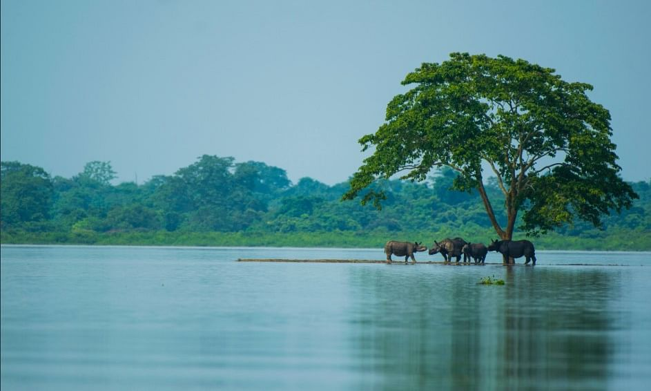 Kaziranga flood: A catastrophe or blessing in disguise?