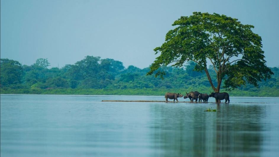 As on August 1, 220 animals were killed during floods in Kaziranga