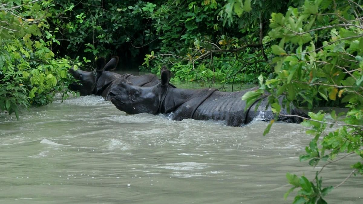 Flood situation in Assam improves