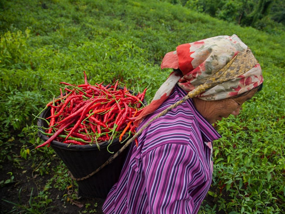 How this local chilli festival is spicing up the market in Manipur