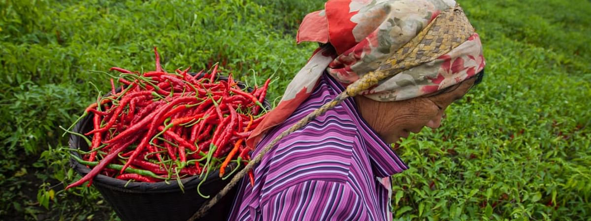 A farmer carrying local Sirarakhong chillis on her way to the market