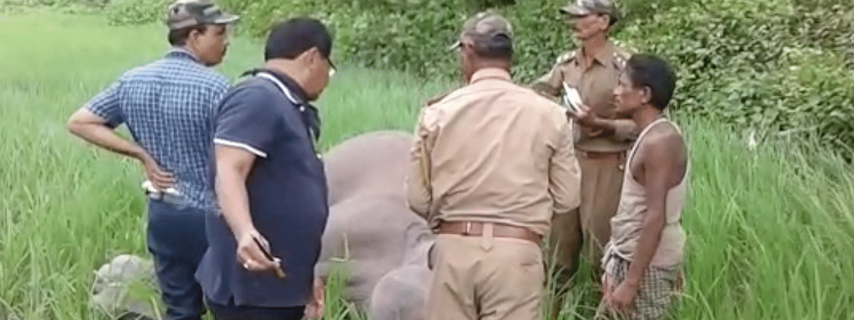 Man-elephant conflict has taken a serious turn in Assam over the years