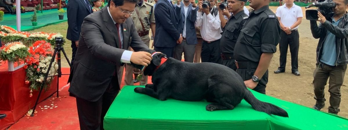 Meghayala chief minister Conrad K Sangma awarding the medal of honour to K9 Brandy, Remor, Saffi and their handlers on the occasion of I-Day celebration