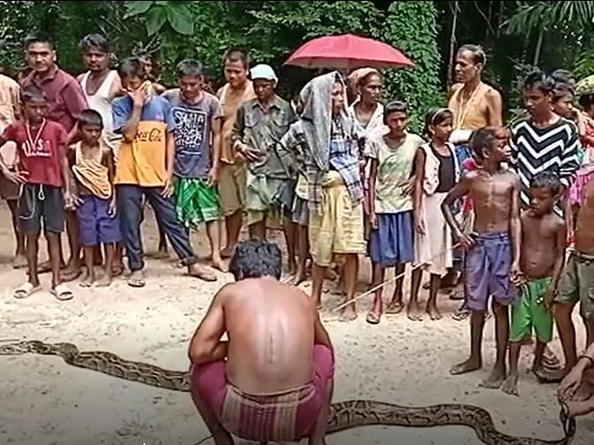 Assam: 14-ft python caught by Nagaon villagers, released later