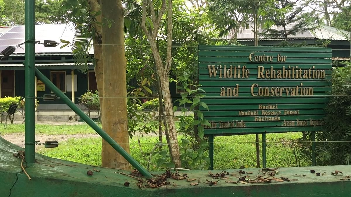 The rhino cub is now being treated at the Centre for Wildlife Rehabilitation and Conservation near the Kohora range of Kaziranga National Park in Assam