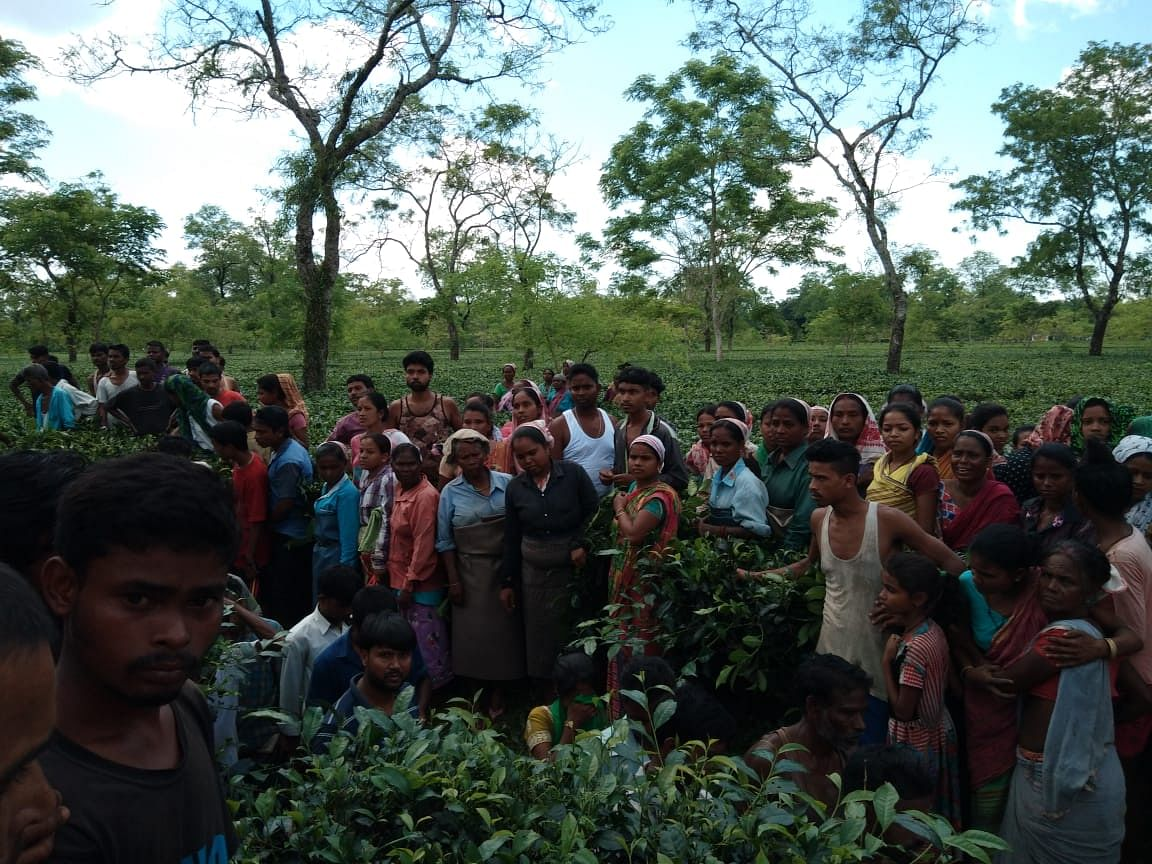 Tea garden workers spotted the girl's body early on Saturday morning while plucking leaves