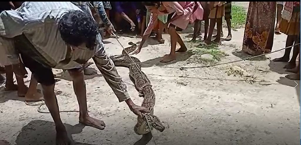 Villagers tied the mouth of the python with a rope