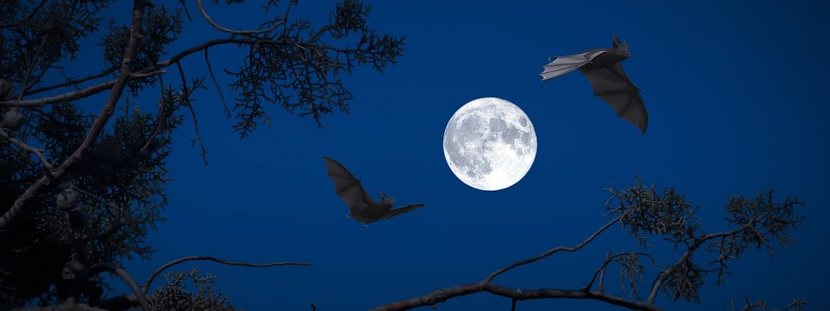 The state forest department is also planning to set up two or three more bat viewing points across Tripura