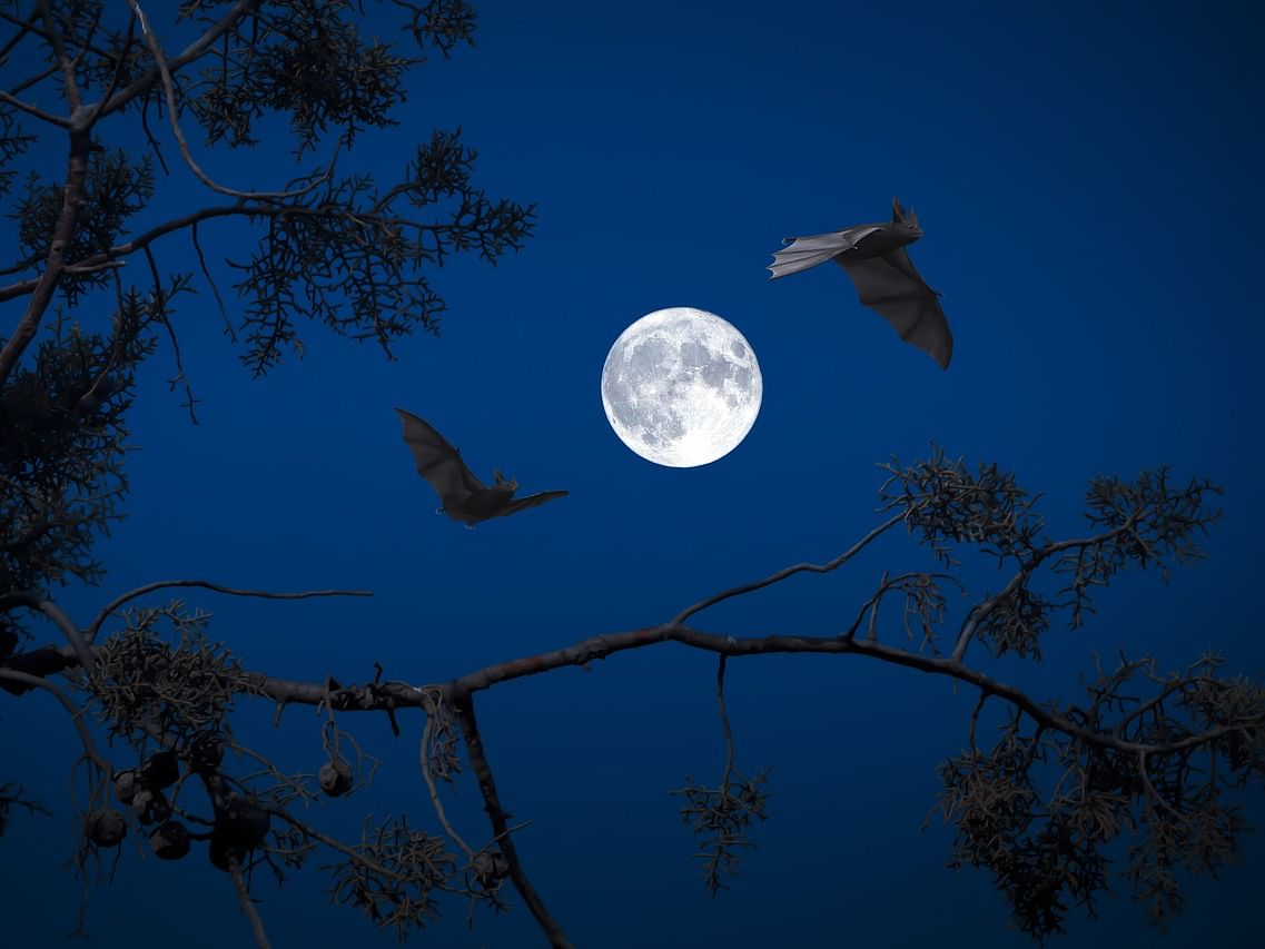 Now, a 'bat colony' to woo tourists in Tripura's Gomati district