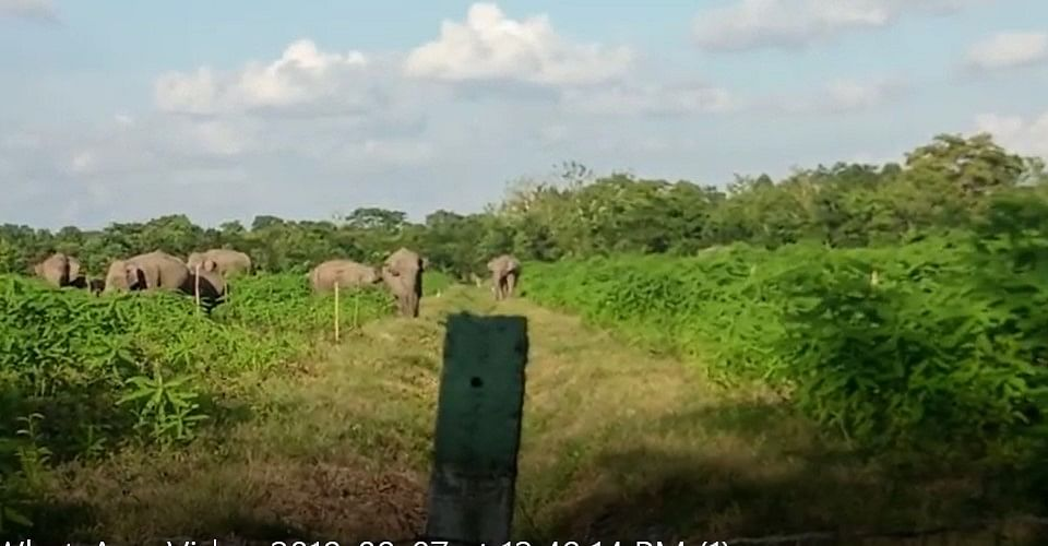 Herd of wild jumbos straying from nearby jungles in search of food in Assam's Udalguri district