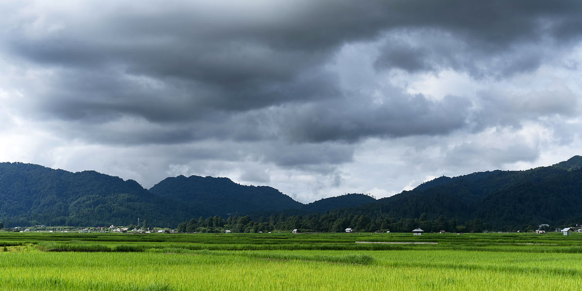 The paddy<a></a> fields at Ziro Valley in Lower Subansiri district of Arunachal Pradesh