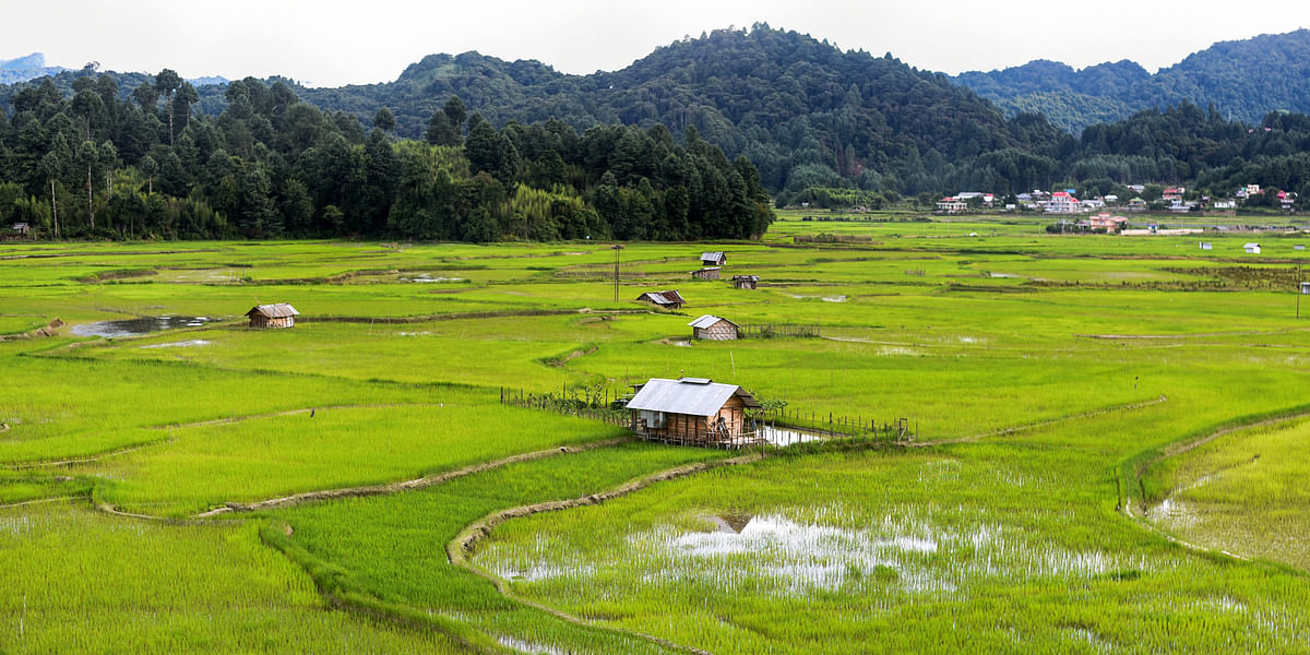Paddy-cum-fish cultivation is practised mainly by the Apatani tribe in Ziro Valley, a progressive agricultural community of Arunachal Pradesh