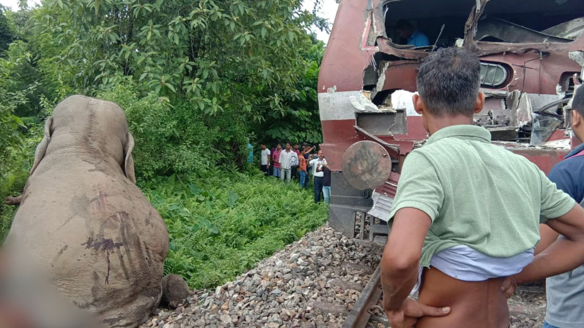 Wild elephant hit by moving train in north Bengal, critically hurt